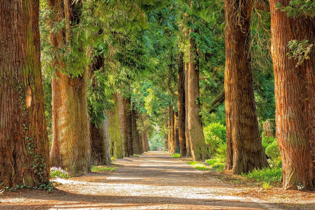 Sporten blijft voor een lichamelijke en geestelijke gezondheid belangrijk. Ga echter dit jaar voor verandering: ga niet naar de sportschool, maar kies voor lekker buiten sporten. Zoek de natuur op. Ga naar het park, het bos, de kust. Kies voor een rustgevende omgeving.