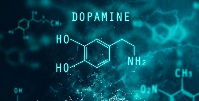 Wat is dopamine en hoe werkt dopamine op je beloningssysteem